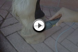 Caso clinico sobbattitura cavallo